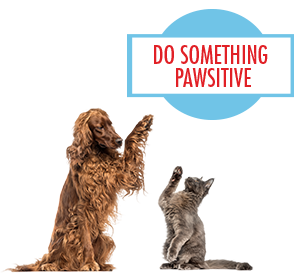 Do Something Pawsitive